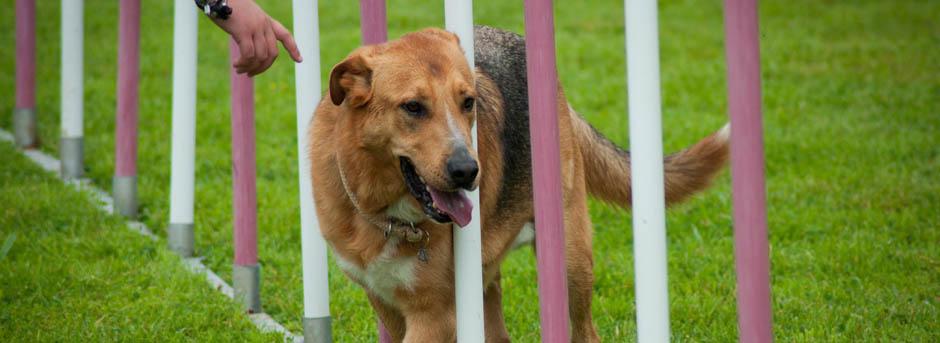 entreprise-canine-moyaux-calvados