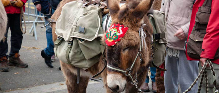 traditionnelle foire aux ânes moyaux calvados Normandie